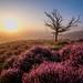 The dead tree by Mario Visser