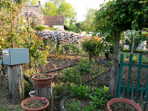 Neighbouring flower garden with clematis.