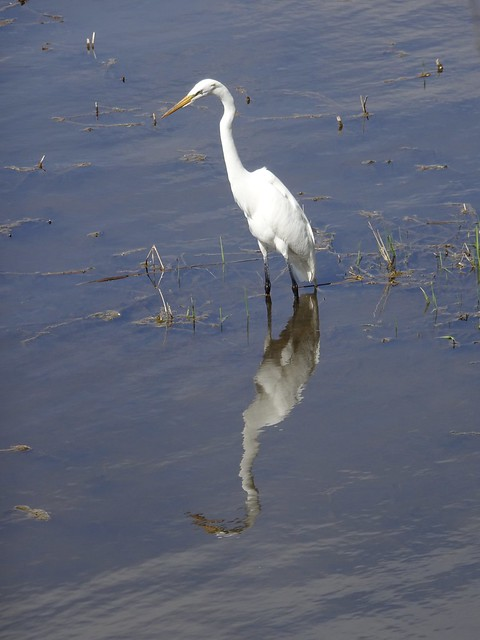 Egret Watching