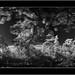 Sony A7 IR, Nikkor 24mm/2