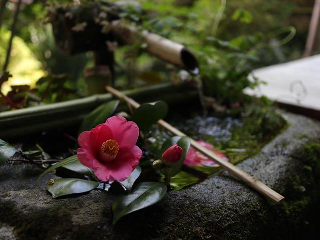 quiet time / Kyoto Hosen-in  京都 大原 宝泉院