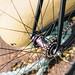Cicli Bonanno 3