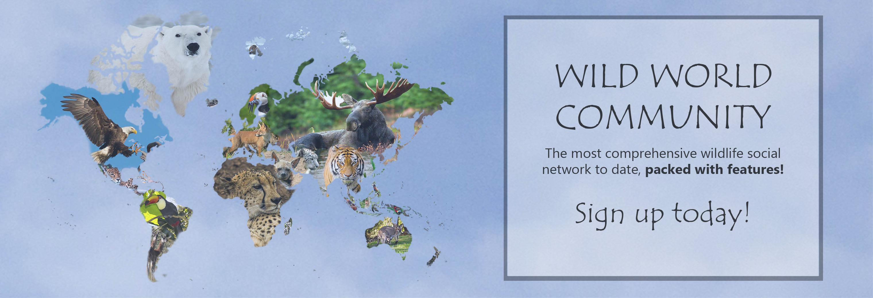 Wild World Community 40825707594_3fa7642cb2_o_d The Wildlife Social Network