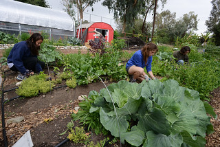 Students at the Organic Farm, March 9, 2014