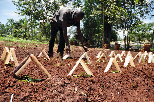 Uganda: Nutrition