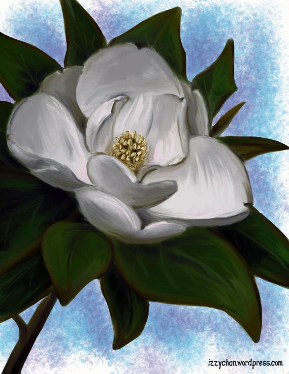 magnolia krita