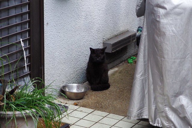 Today's Cat@2018-04-21