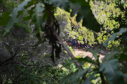 Hinter den Bäumen rastet eine Gruppe an einer Levada