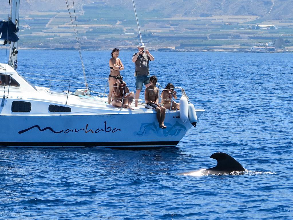 Avistamiento de ballenas y delfines en Tenerife