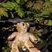 The abandoned teddy-bear