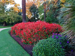 Albury. These colourful Botanic Gardens noted for its fine trees was established in 1877.