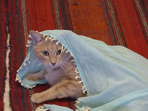 chaton coquin