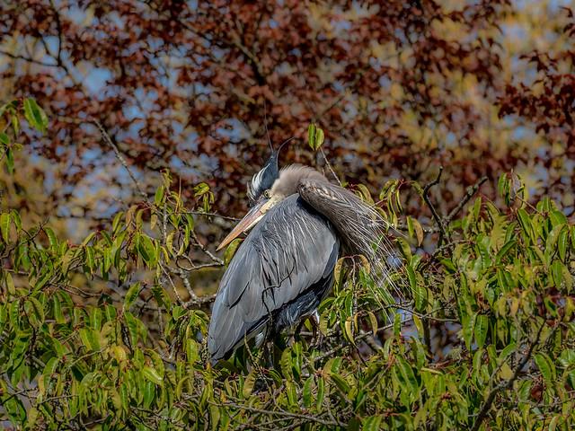 Local Park Wildlife - Contortionist :)