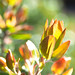 Blended Leaves Sunlight