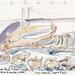 2018 0418 Whale bones
