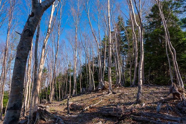 伐採の爪痕
