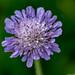 J'ai caché, mieux que partout ailleurs, au jardin de mon cœur, une petite fleur... by CHR67