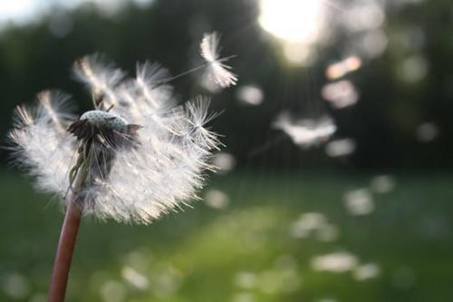 los vientos del cambio