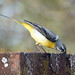 Grey Wagtail by NickWakeling