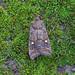 Satellite, Burntisland, Fife, Scotland