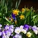 Spring Gardens 2018