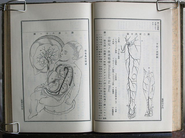 今田束『實用解剖學』卷三 明治33年十版(後半)