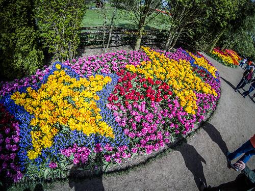 Skagit Valley Tulips-184