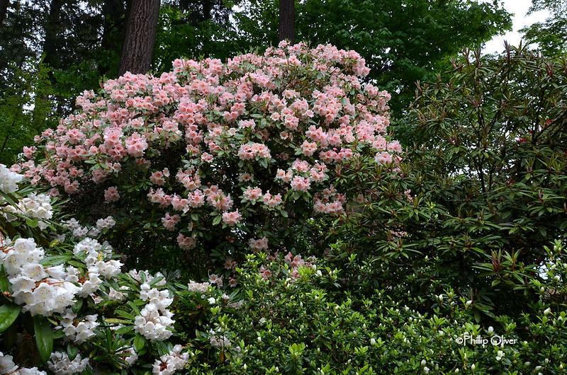 cecil-smith-garden-7