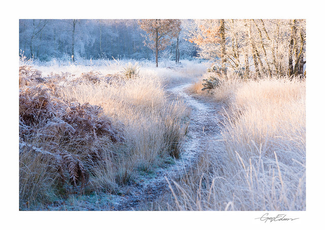 Frosted Common
