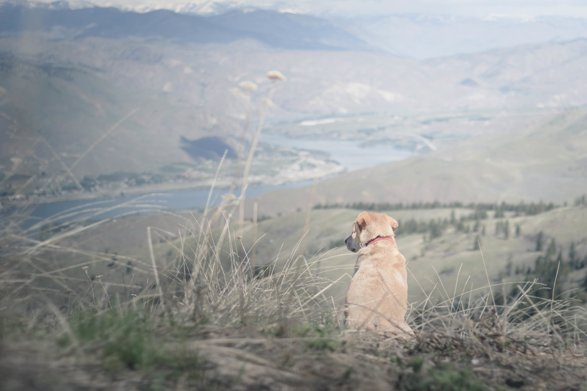 Summit dogs on Badger Mountain