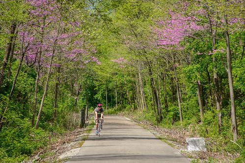 Bike Rider on the Cardinal Greenway