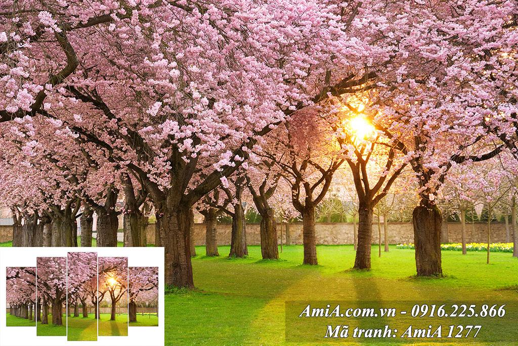 Tranh phong cảnh thiên nhiên mặt trời mọc trên hàng cây hoa anh đào