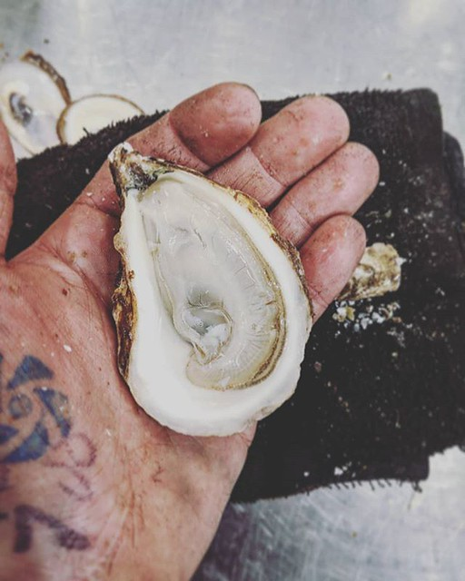 The humble, beautiful and hardworking oyster. Nature's natural water filter and one of my favourite ingredients ever!