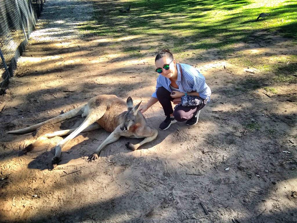 Brisbane - Lone Pine -Anais qui caresse un kangourou