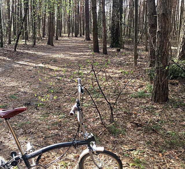#dudasss #brompton #forest #narure #spring #green #tree #way