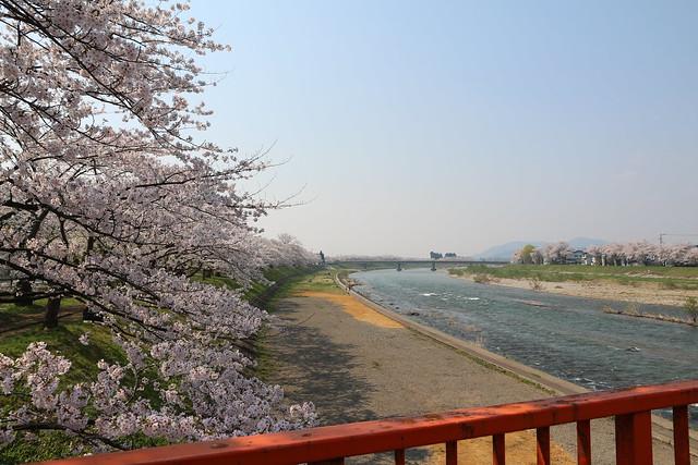 角館 桧木内川 横町橋から