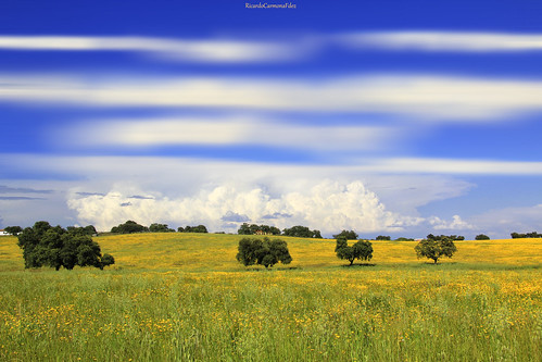 Campo andaluz - Andalusian countryside  # 01