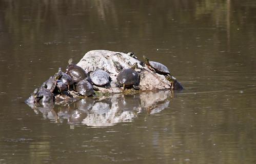 National Bison Range - Turtle Rock