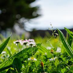 Toujours le nez dans l'herbe - Photo of La Haye-du-Puits