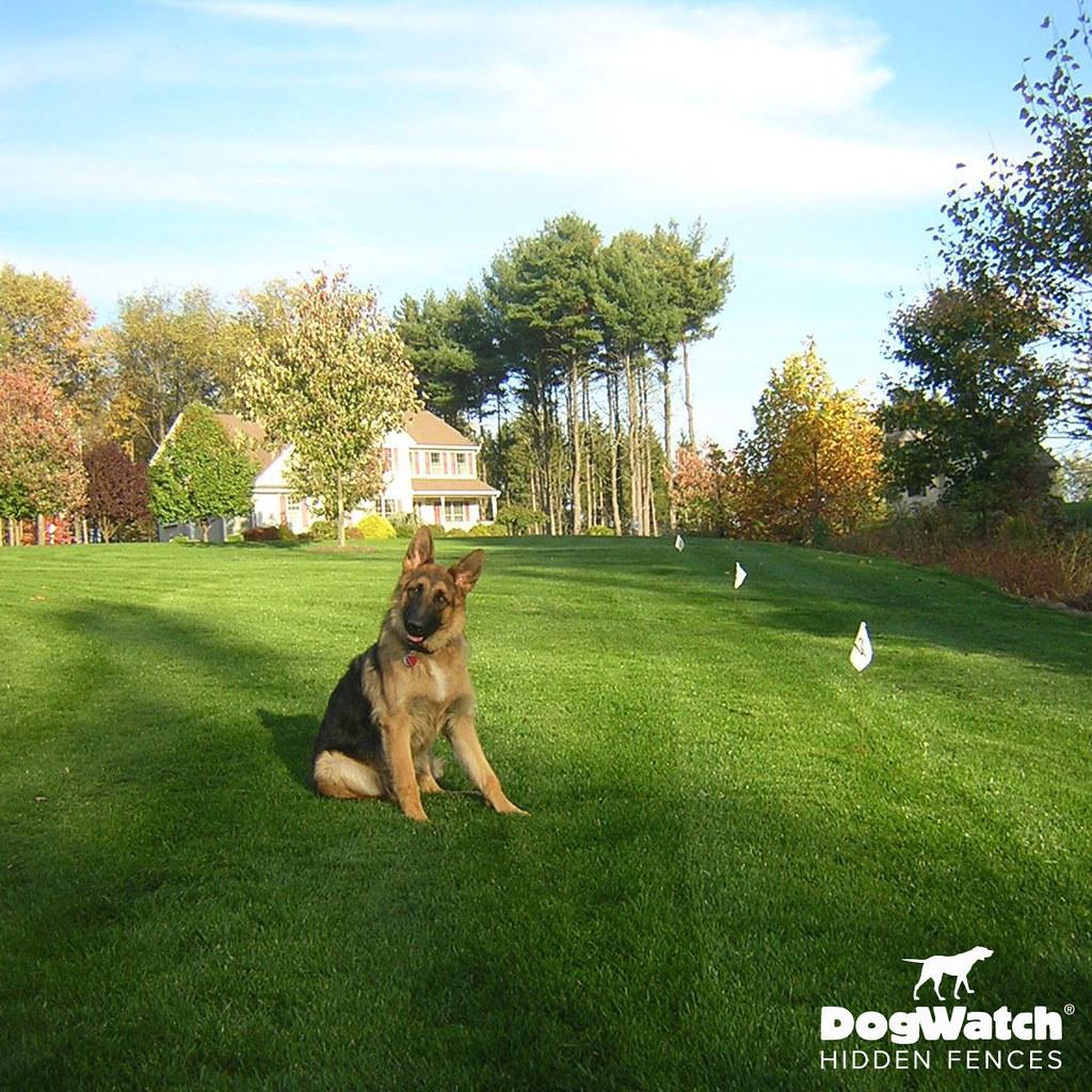 Hidden Dog Fence Customer Photo Gallery Dogwatch 174 Of The