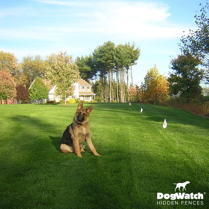 German Shepherd, DogWatch by Kriger Fence