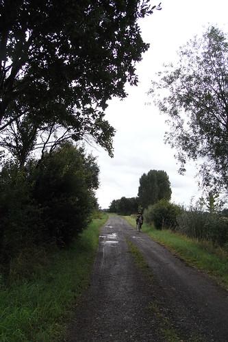 20100830 111 0110 Jakobus Weg Bäume Regenpfützen ElisabethB Pilger
