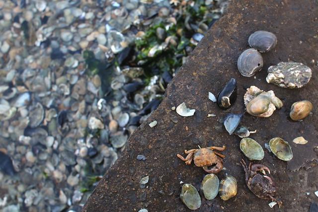 태화강하류 과거 조개섬 근처 강가. 조개껍질만 가득하다