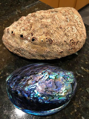 Pāua is the Māori name given to three species of large edible sea snails, marine gastropod ... Highly polished New Zealand pāua shells are extremely popular as souvenirs with their striking blue, green, and purple iridescence.