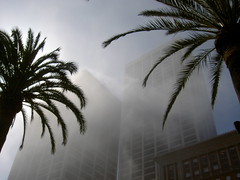 Foggy downtown with palm trees