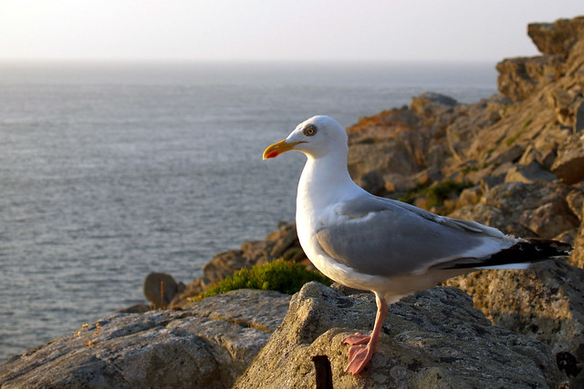 Seagull after a fight?