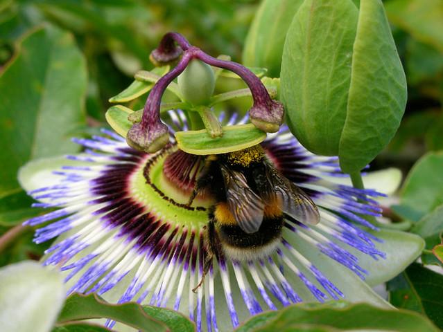 Passionate pollination, Nikon S2