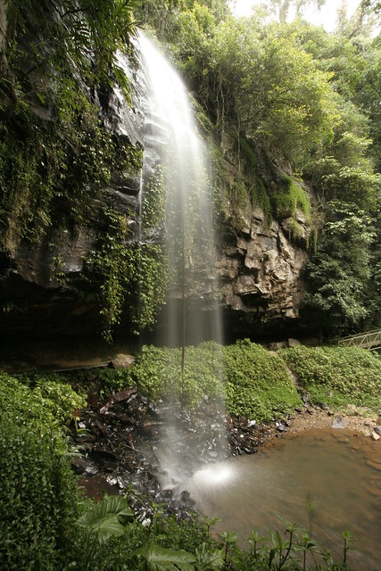 Crystal Shower Falls Dorrigo National Park By