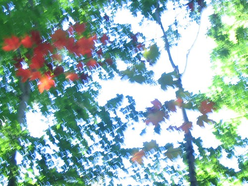red leaves greendrench