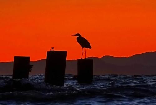 ocean california blue sunset red sea sky bird colors sunglasses silhouette grey bay bravo hills albany sanfranciscobay hdr trilogy gonewiththewind goldengatefields albanyca flopper interestingness27 i500 explorefrontpage photomatrix bonzag p1f1 explore20sep2006 iwillneverbehungryagain